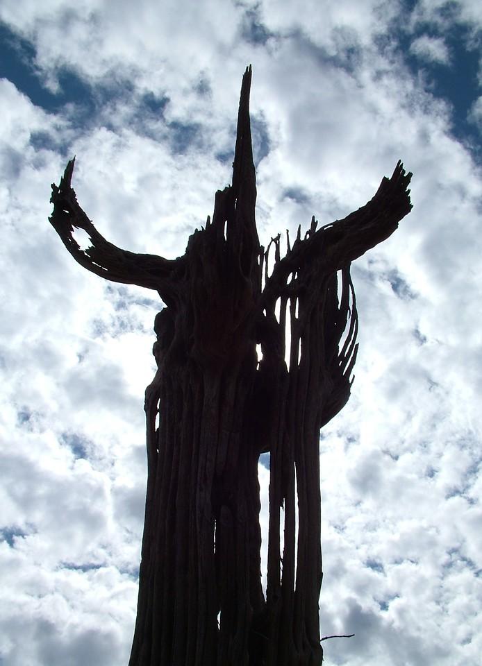Arizona Devil