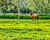 Equine Paradise Dry Brush