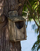 Lake Nassau Birdhouse