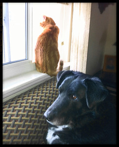 Cat, dog, and window