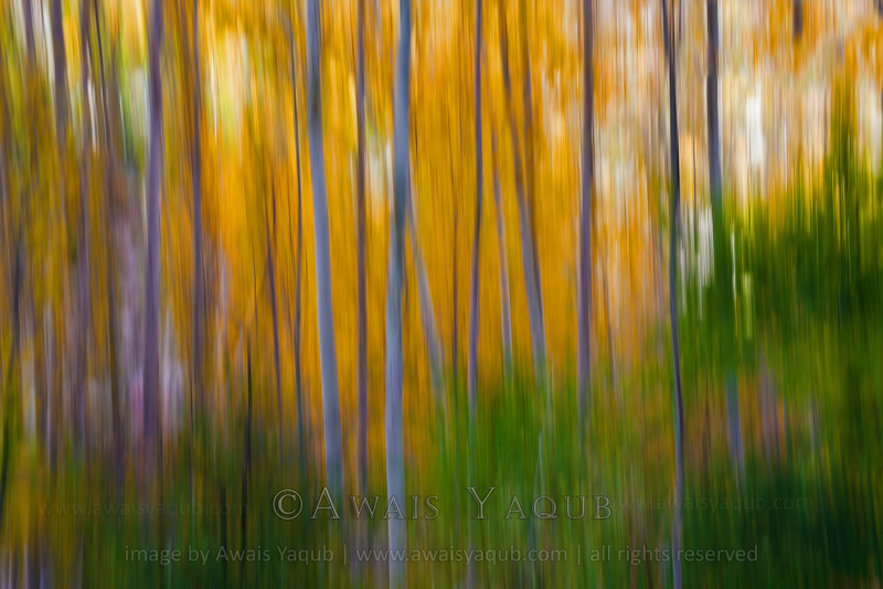 Abstract autumn