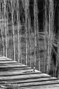 Walk through Shadows and Light