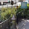 Green Hydrant, NYC