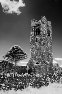 MONKEY PUZZLE AND TOWER--HILL OF SLANE--CO. MEATH, IRELAND