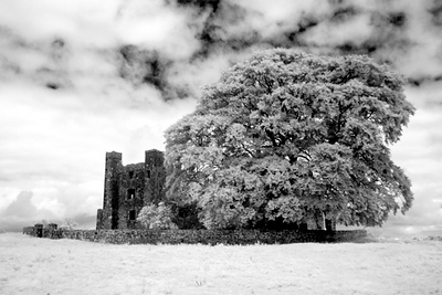BECTIVE ABBEY & TREE