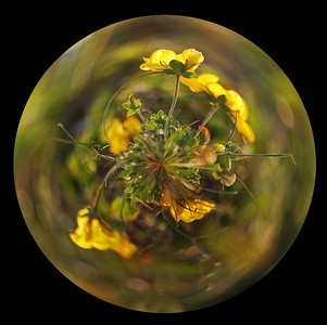 Flowers in a Bubble  It's been a while since I did this trick, but sometimes photos lend themselves to it.  For those that haven't tried it yet there are some simple instructions here;  http://content.photojojo.com/tutorials/create-your-own-panorama-planets/  and I have a whole gallery of them here;  http://www.lightanddreamsphotography.com/Photography/FAUX-PLANETS/4860246_QTSyX#808938645_35jF9  Happy experimenting :)