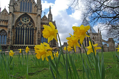 Happy Easter!  Getting down with the daffs. I must have taken thousands of photos of Lincoln Cathedral, and although it changes every day with different lighting, I'm always looking for a new angle or perspective. I'm still going through a phase of getting down low among the flowers, despite struggling with my bad back, and these daffodils lent themselves to this treatment.  While I was taking a few shots like this, another photographer came along and set up his tripod just off to my right, and immediately in front of all the flowers. Quite why he felt the need for a tripod in broad daylight I'm not sure, and he didn't even think twice about including the daffodils in his shot. I think that many photographers miss so much by not thinking (or looking) outside the box.
