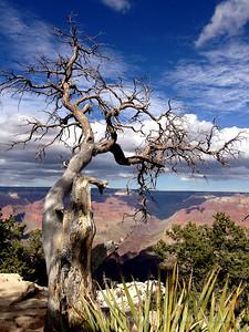 Reaching over Canyon III