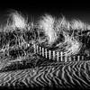 Dune Rhythms