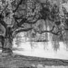 treeir-3795 copy