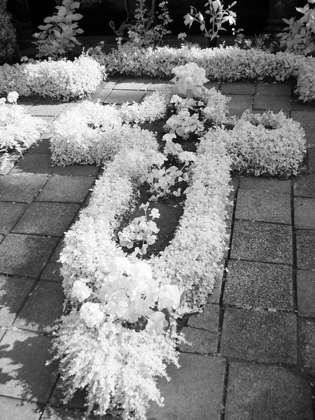 2005-07-13_05598 Pflanzenkreuzcross made of plants (2)