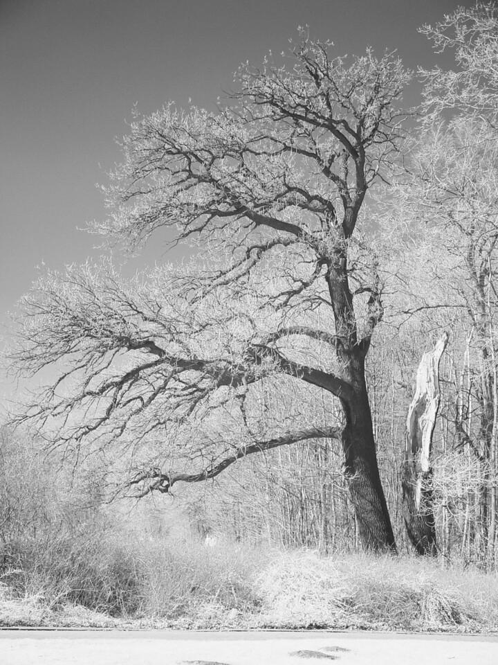 2005-04-02_04529 gruseliger Baumcreepy tree