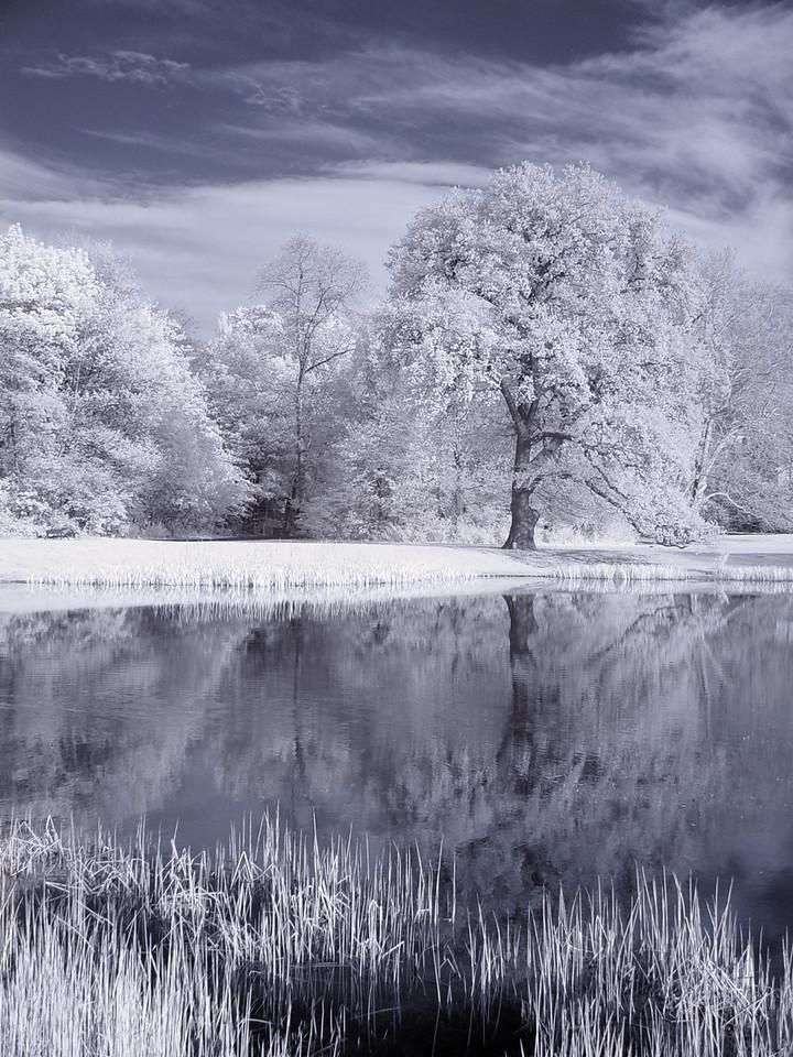 2005-04-27_04689 Winterrevue (Infrarot)Winter revue (infrared)