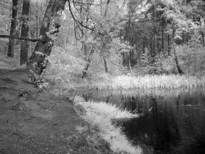 2005-05-06_04752 der Tümpela small lake