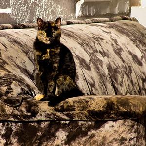 CAMO-CAT