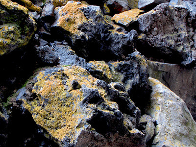Nobody, North America, USA, New Mexico, Ice Cave and Bandera Volcano, Lichen on Rocks at Ice Cave Enrtance