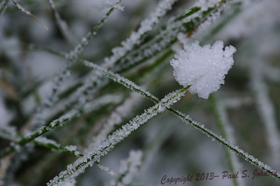 Frost_052