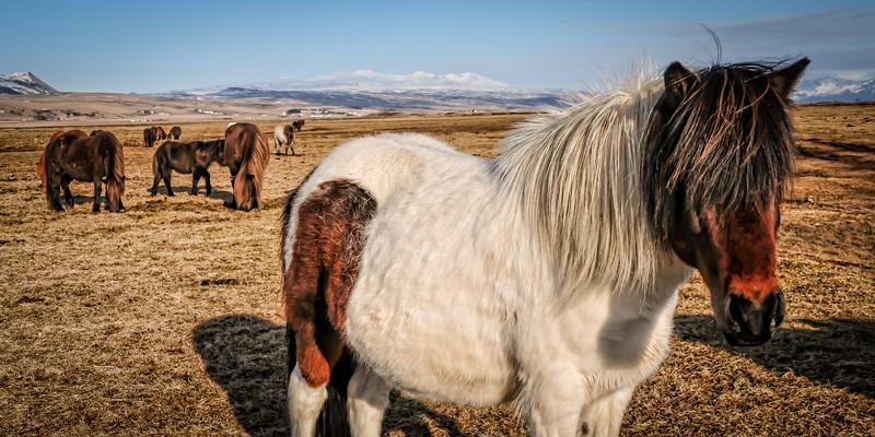 Iceland 2014-8