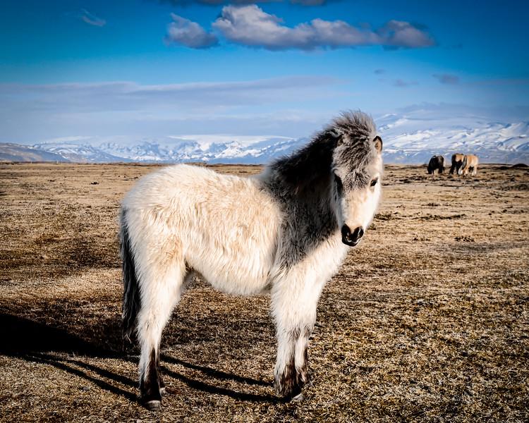 Iceland 2014-9