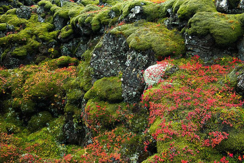 Ice 398 Mossy Rocks, Pingvellir Natl. Park, Iceland