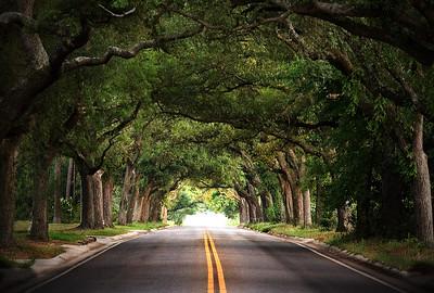 12th Avenue trees