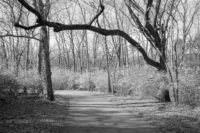 trail+trees-t1359