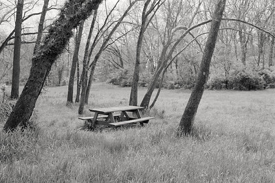 picnic_table+trees-t1382