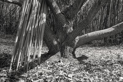 chestnut+bamboo-t1366