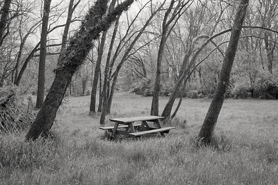 picnic_table+trees-t1381