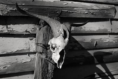ram_skull+post-t1321