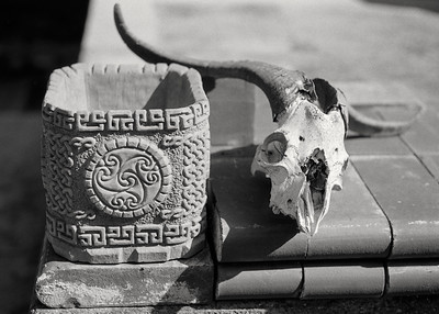 ram_skull+pottery-t1352