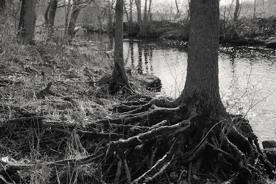 trees+creek-t1330
