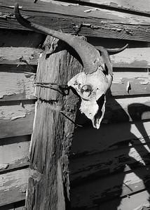 ram_skull+post-t1320