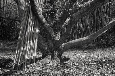 chestnut+bamboo-t1348