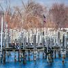 Fox Lake Gulls