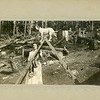 Trained dog on a ladder with a woman, outhouse in background, felled trees, ca. 1900.  MP SP