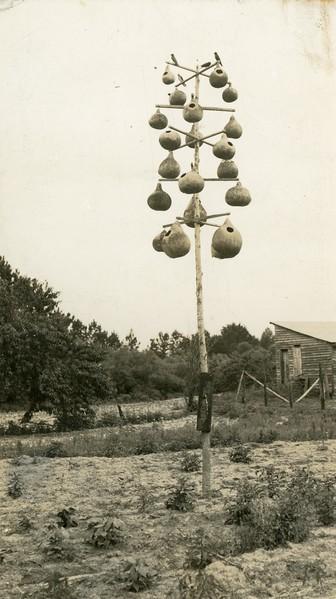 Bird houses made of gourds on a pole, bluebirds, 1941.  RPPC.