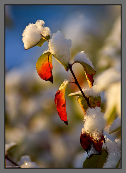 First autumn snow -II<br /> Bodø