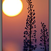 Cretan flower sunset