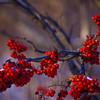 2008-11-23-13-04-42_7439_K10D