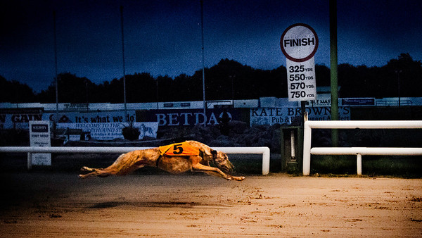 Tralee greyhound track