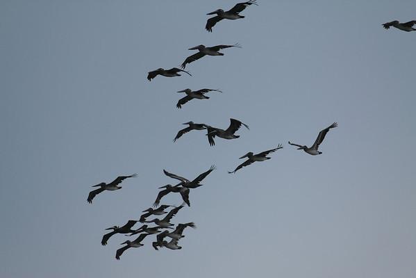 Pelican Files