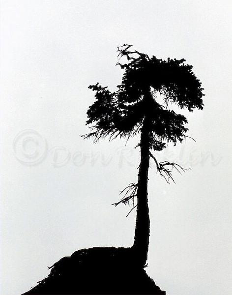 Lone Tree Tree on Hoodoo, Bay of Fuundy, New Brunswick, Can.
