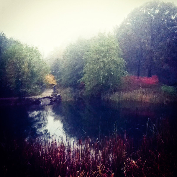 Foggy day at the EcoTarium upper pond.<br /> City Hall Basement Gallery - Nature Show