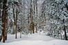 Winter in New Hampshire