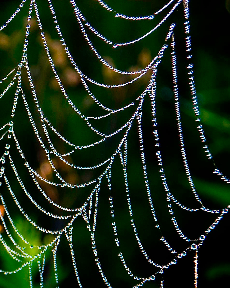 Spiders Lace