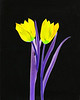 Tulips 3 - 3 of 3