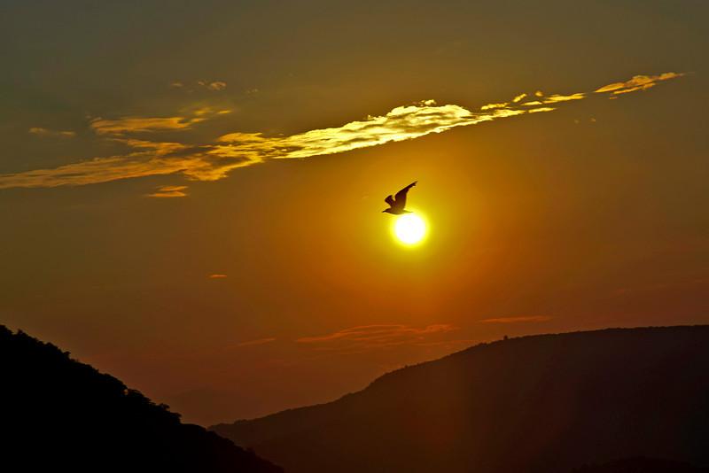 BIRD OF PIECE # 2.