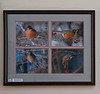 Winter Robins displayed in Highland Falls Library and Hudson Valley Hospital 2012 and 2013