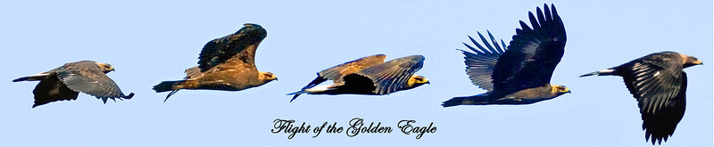 FLIGHT OF THE GOLDEN EAGLE.
